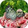 蝴蝶拼图 - 拼图益智游戏为孩子
