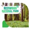 Redwood National Park Travel Guide