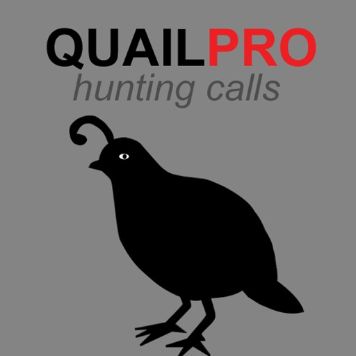 REAL Quail Sounds and Quail Hunting Calls HD