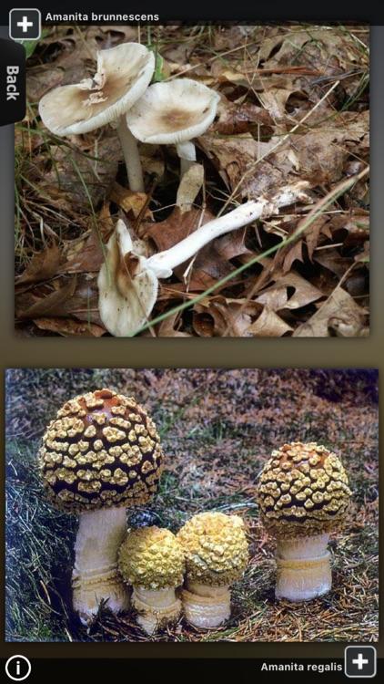 Mushrooms Encyclopedia