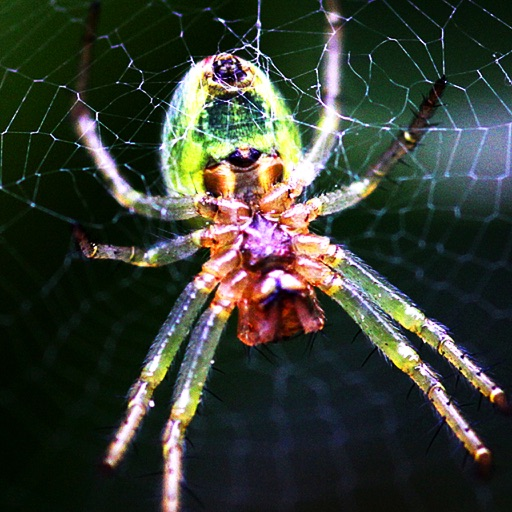 Spider Bible