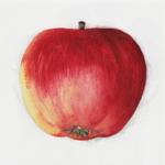 Äppelappen на пк