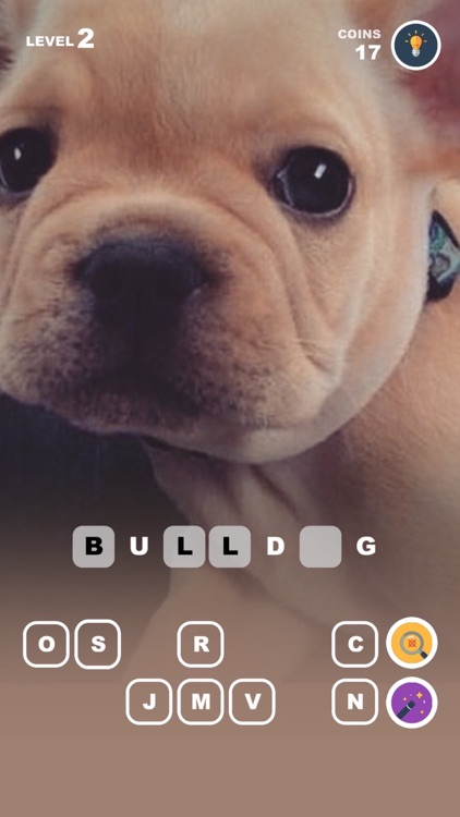 Puppy Nation – photos of cute dogs with pink nose screenshot-4