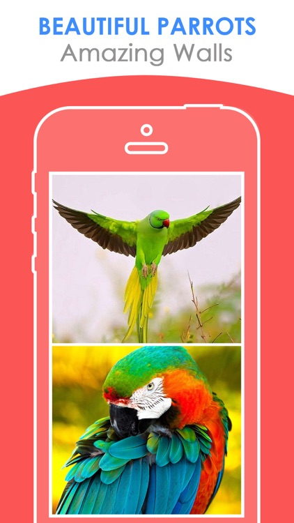 Beautiful Parrots Wallpapers | Backgrounds FREE