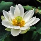 Flores por el Selim icon