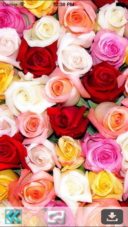 Rose Wallpapers (HD)