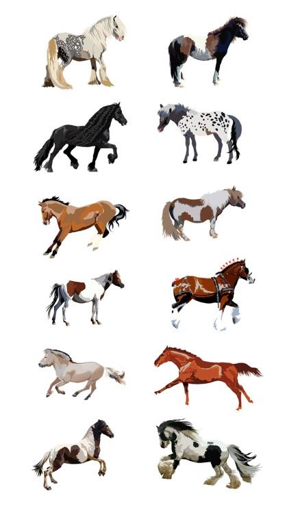 Realistic Horse Art - Horses, Arabian, Appaloosa
