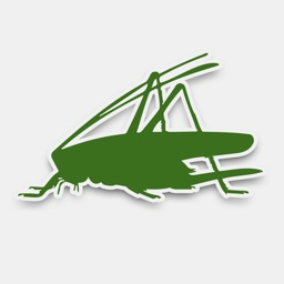 iRecord Grasshoppers