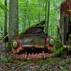 Activities of Abandoned Forest Treasure Escape