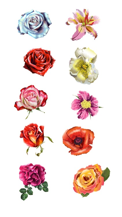 Roses and Flowers - Flower Art - Love, Friendship screenshot-3