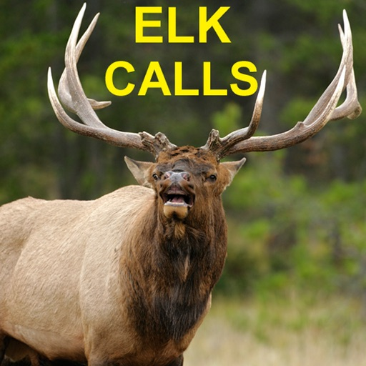 Elk Bugle & Elk Calls for Elk Hunting