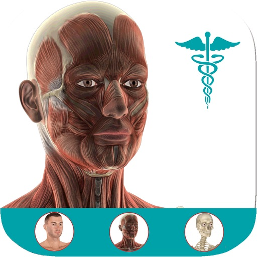 Anatomy Atlas: 3D Anatomical Model and Animation