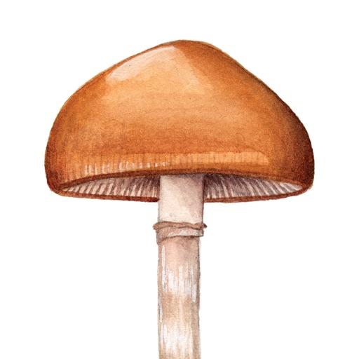Mushroom Guide - North America
