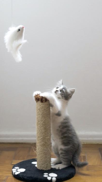 Cat & Kitten Wallpapers - meow screenshot-3