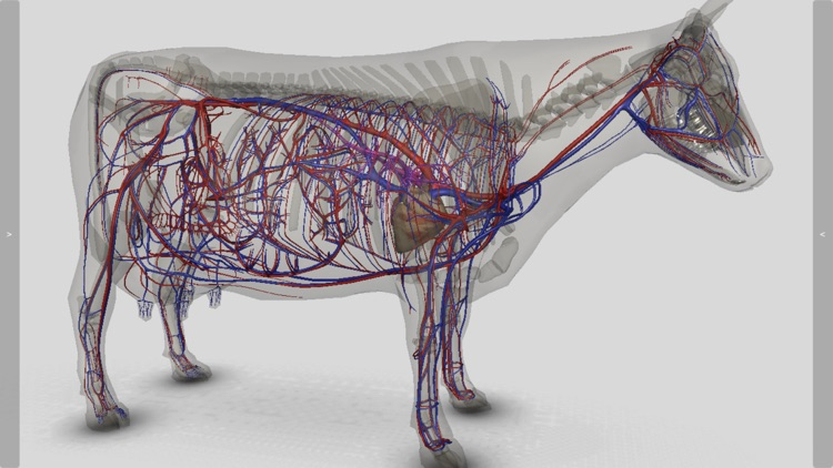 3D Bovine Anatomy screenshot-8