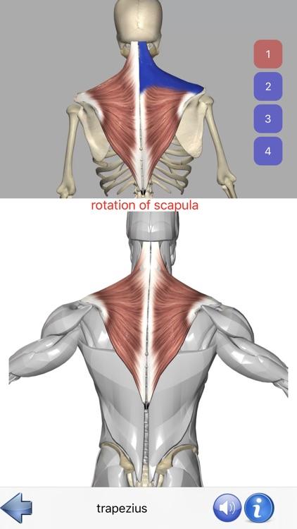 Visual Anatomy screenshot-3