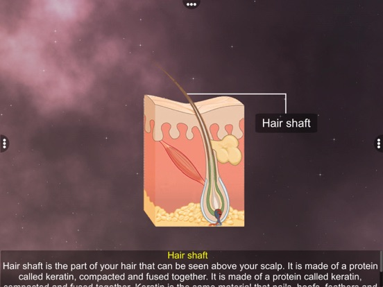 Skin: Integumentary System screenshot 12