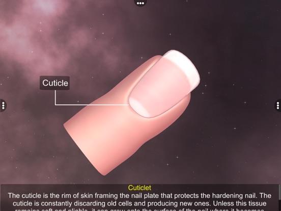 Skin: Integumentary System screenshot 14