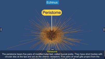 Echinodermata screenshot 10