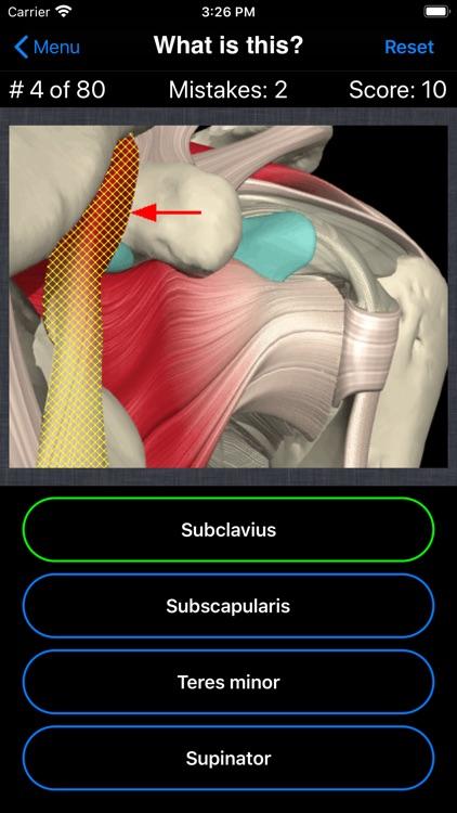 Anatomy Shoulder Quiz