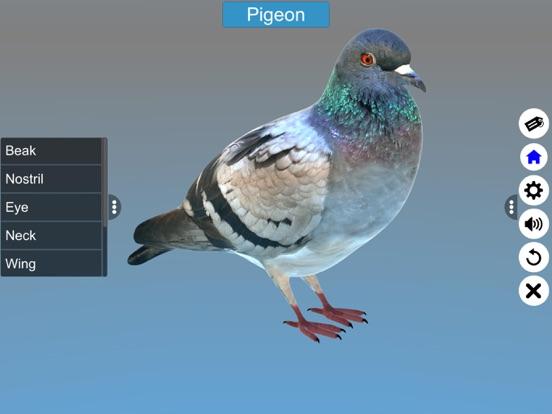 Diversity in Living: Aves screenshot 20
