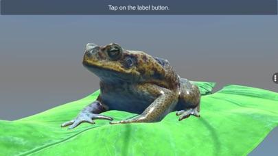 Diversity in Living: Amphibia screenshot 7
