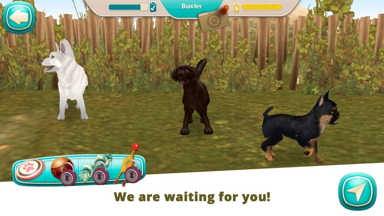 Dog Hotel - Play with dogs screenshot-7