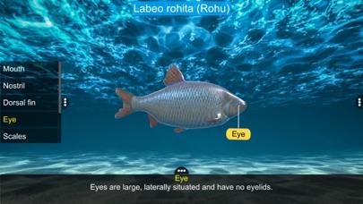 Diversity in Living: Pisces screenshot 4