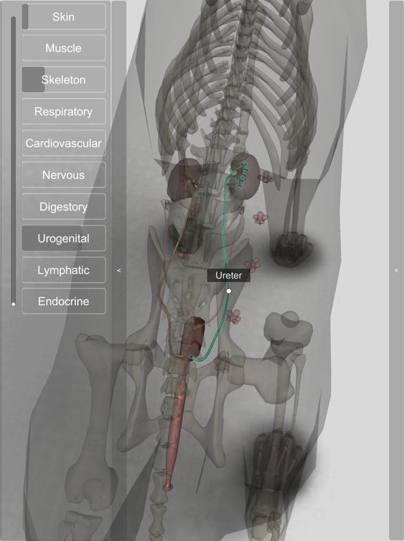 3D Canine Anatomyのおすすめ画像6