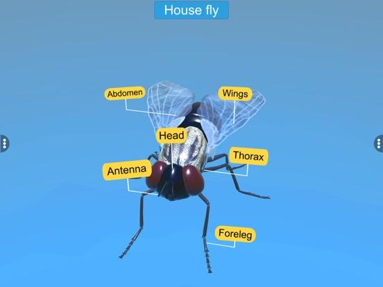 Diversity in Living:Arthropoda screenshot 14