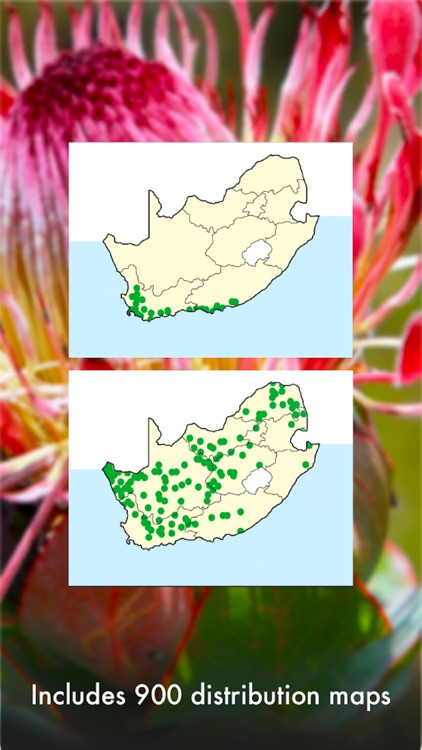 Wildflowers of South Africa screenshot-4