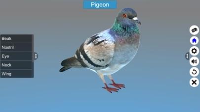 Diversity in Living: Aves screenshot 10
