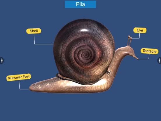 Diversity in Living: Mollusca screenshot 15