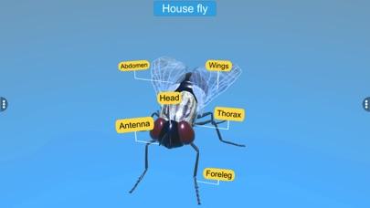 Diversity in Living:Arthropoda screenshot 5