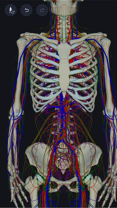 3D人体解剖学 teamLabBody2020のおすすめ画像2