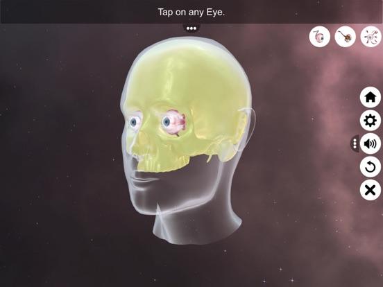 The Eye (Anatomy & Physiology) screenshot 11