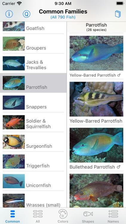 Solomon Islands Fish ID screenshot-7