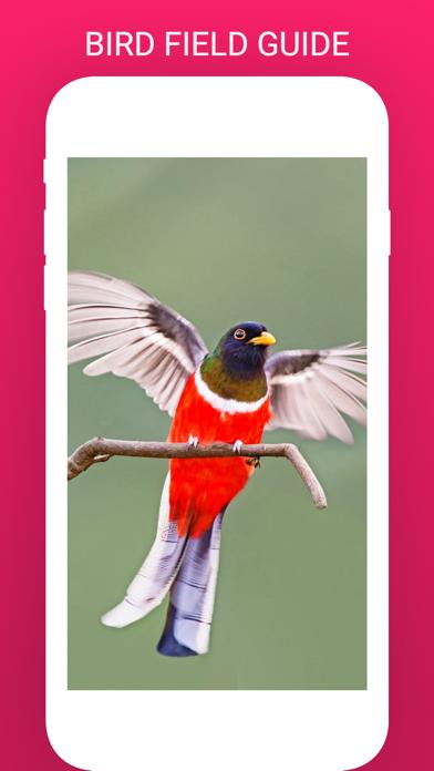 Bird Box - Photo Identify Bird screenshot 3