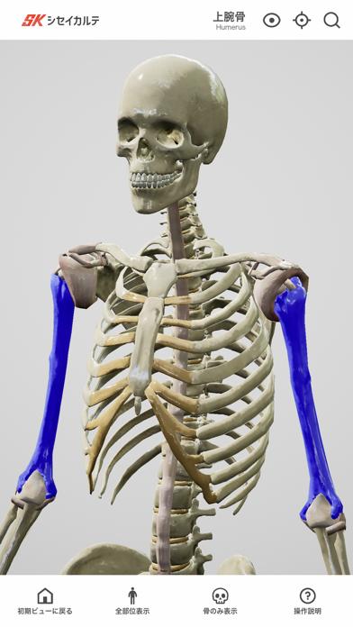 シンプル人体模型紹介画像2