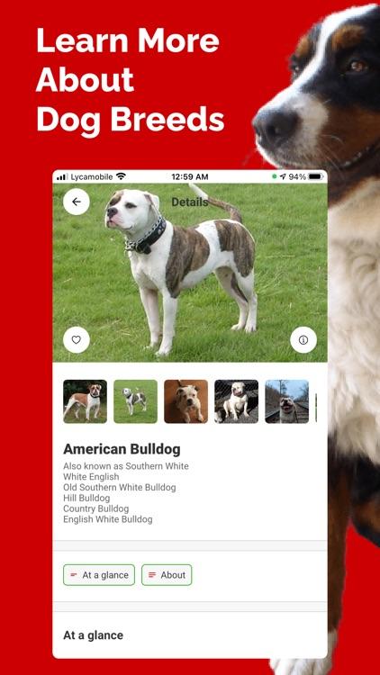 Dog Breed Identifier - Doge screenshot-3