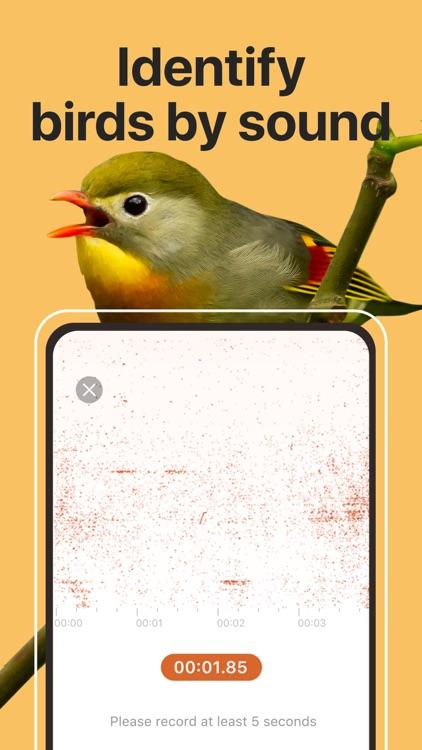 Picture Bird: Birds Identifier