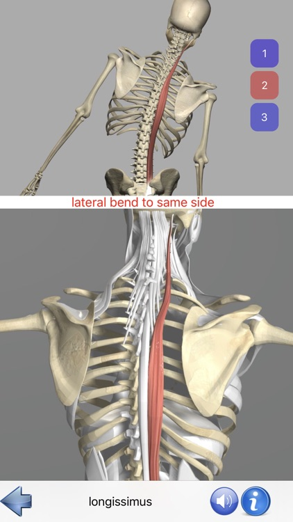 Visual Anatomy screenshot-5