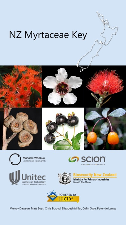 NZ Myrtaceae Key