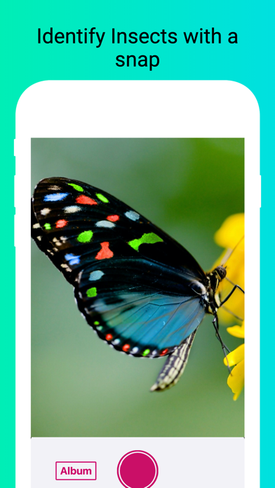 Insect Identifier - Scan Bugs screenshot 1