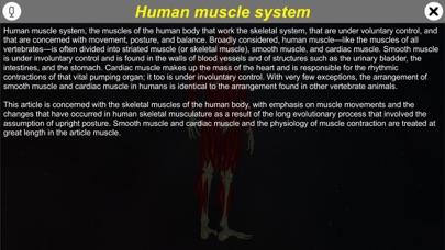 Learn Muscular System screenshot 1