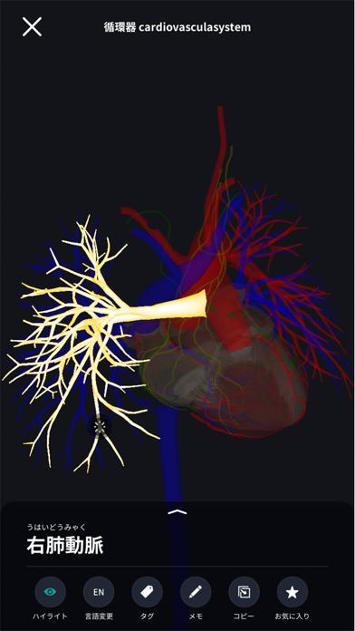 3D人体解剖学 teamLabBody2020のおすすめ画像4