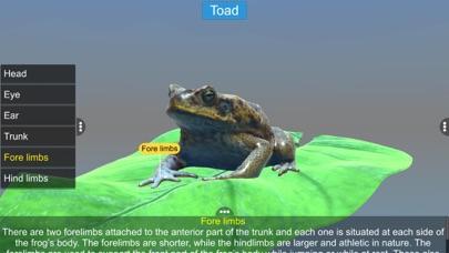 Diversity in Living: Amphibia screenshot 9