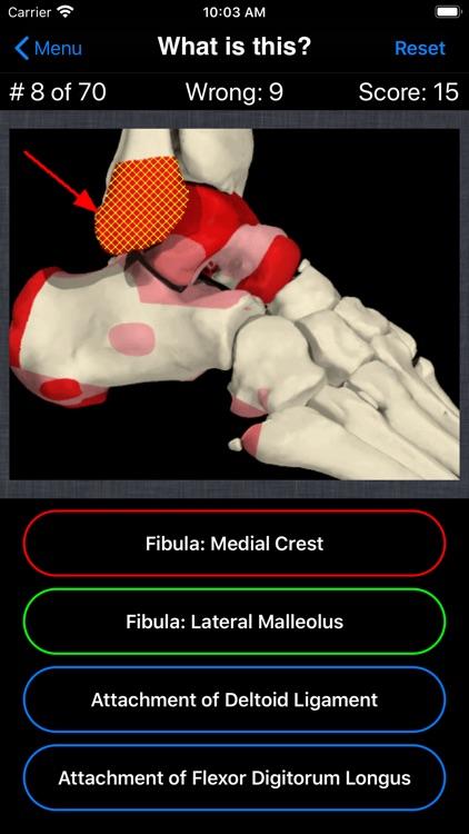 Anatomy Foot Quiz