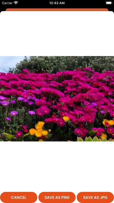JPEG «» PNG Image Converter Screenshot