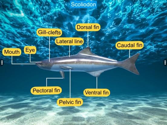 Diversity in Living: Pisces screenshot 15